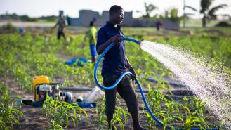 These farmers grow maize, onions and other vegetables in a city in Ghana. They use groundwater to irrigate their crops